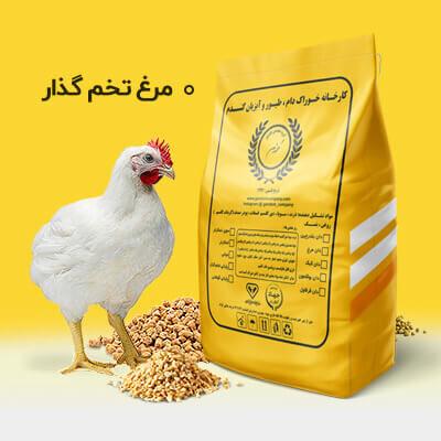 مرغ تخم گذار مرحله 1